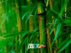Ser como el bambú